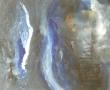 Métamorphose 1 Acrylique 50cm/61cm Jouy 2010